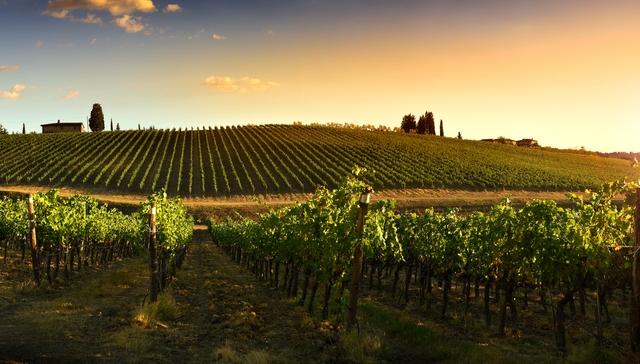 Corso Sommelier lezione 01-02_viticoltura AIS Piemonte