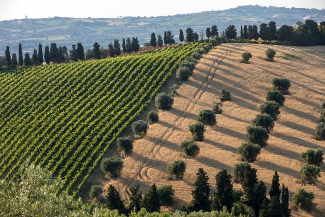 Corso Sommelier lezione 02_08_abruzzo AIS Piemonte